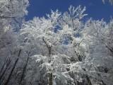Fotogalerie Zimní fotografie, foto č. 2