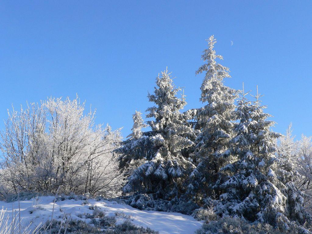 19. prosince 2008 v 16:51| obrázky